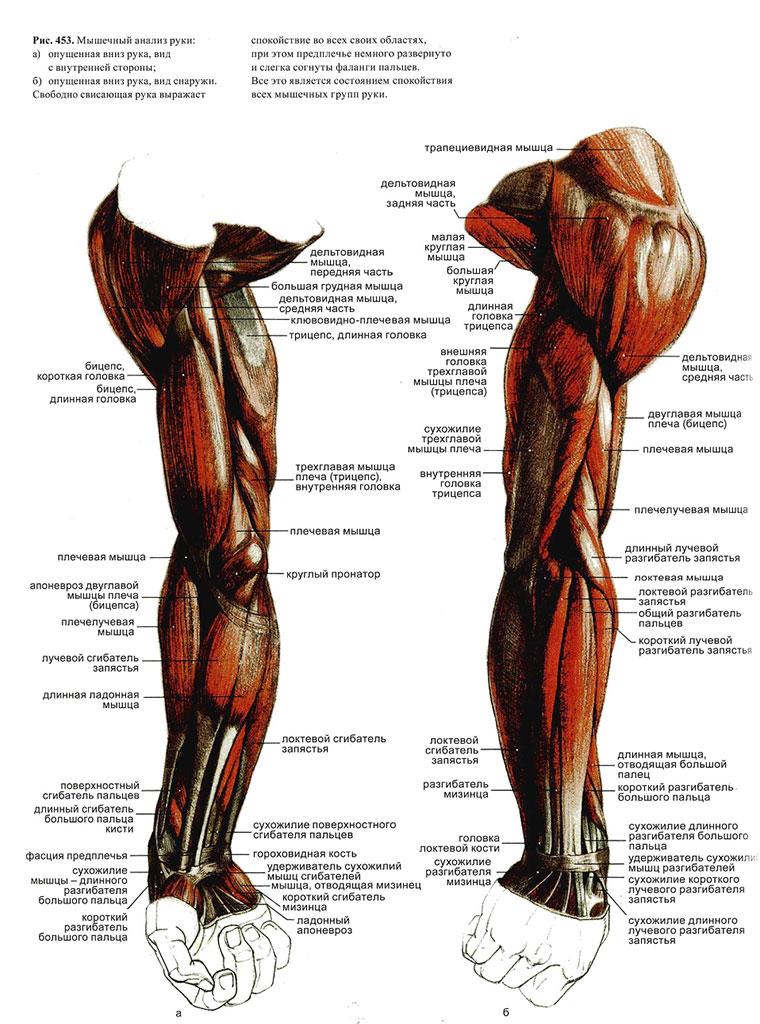 рисунок руки скелета