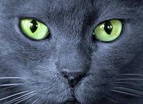 http://s6.hostingkartinok.com/uploads/images/2013/08/b745ddfe1b8454105f3aec5c7cf699a5.jpg