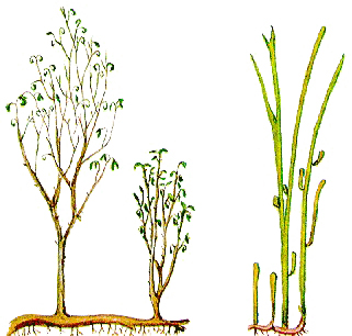 Якімі былі самыя першыя расліны на Зямлі?