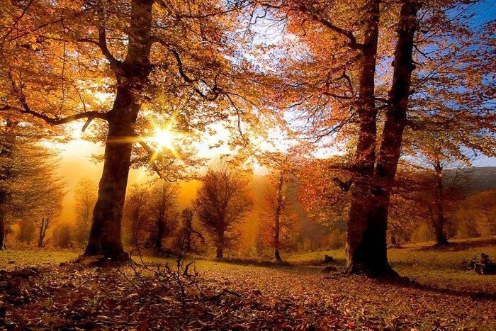 http://s6.hostingkartinok.com/uploads/images/2013/11/4c231cbbf67096a40b7aa3f9e2bbea42.jpg