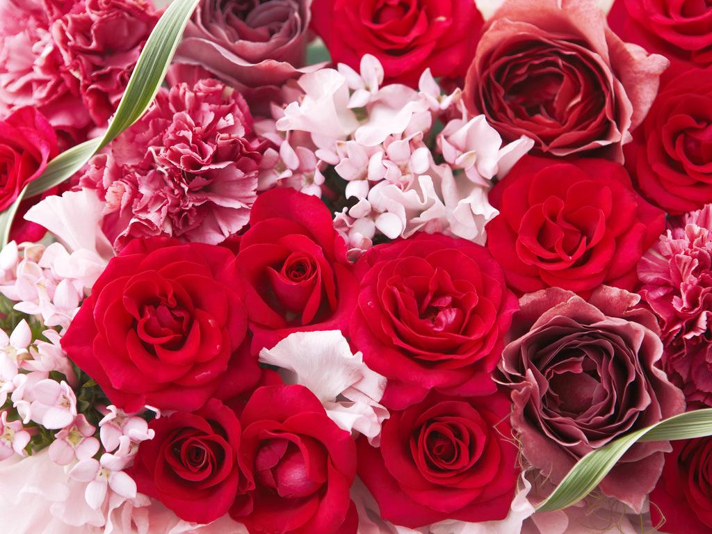 Цветы романтика картинки 8
