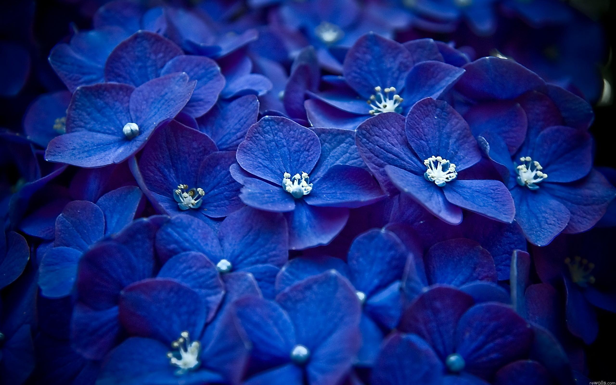 Dark Blue Flowers Tumblr Wallpaper High Quality  Dark