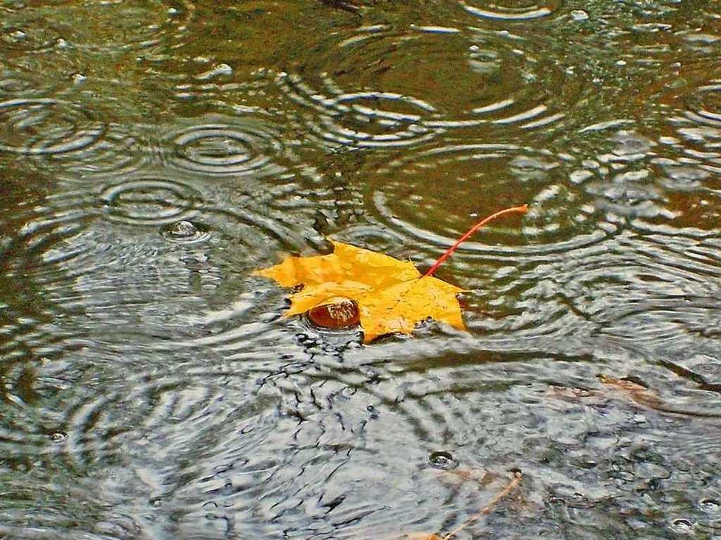Смотреть золотой дождик лесбиянок