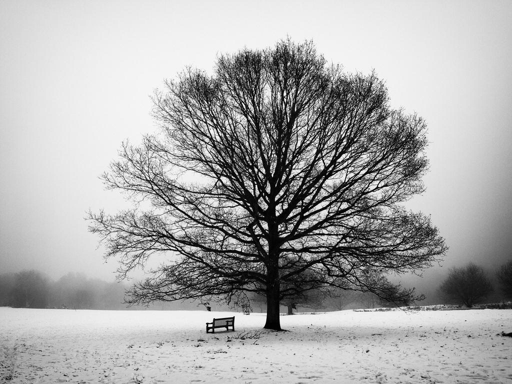 пару дней фотобанк черно белые деревья истории этого